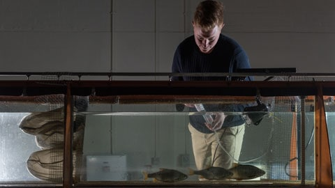 researcher working with fish in the flume
