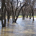Image of a flooded woods