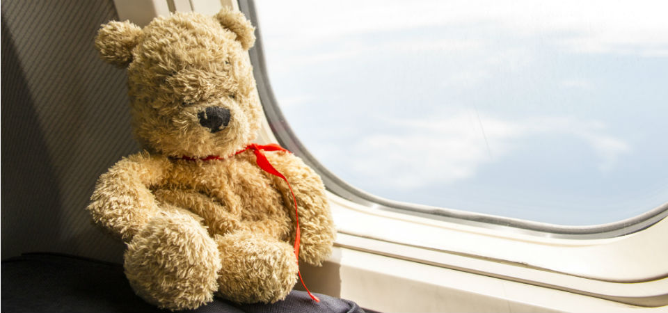 Teddy on a plane