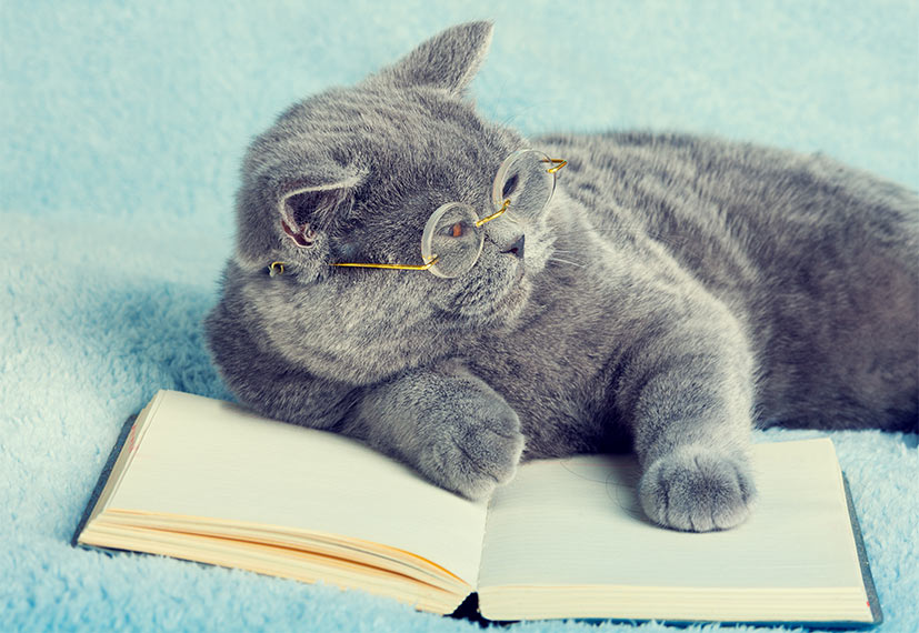 Pictured is a cat reading.