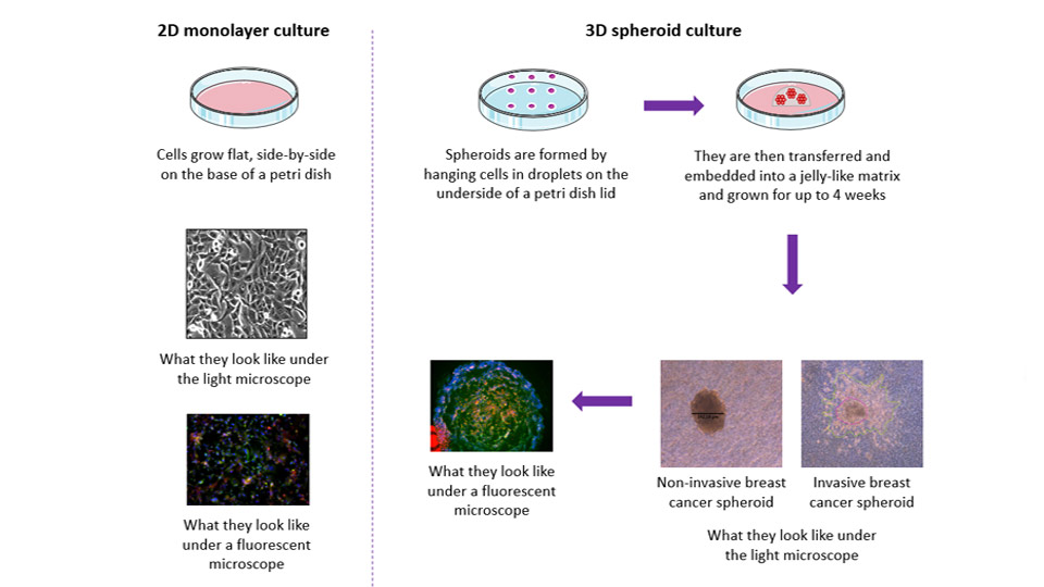 Image showing the benefits of 3D cancer models compared to 2D.