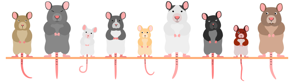 Drawings of mice in a row