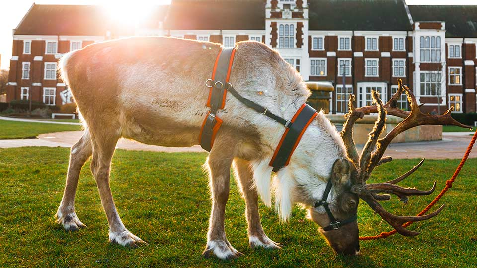 The winter wonderland event featured reindeer, snow and more. Image courtesy of Loughborough Students' Union.