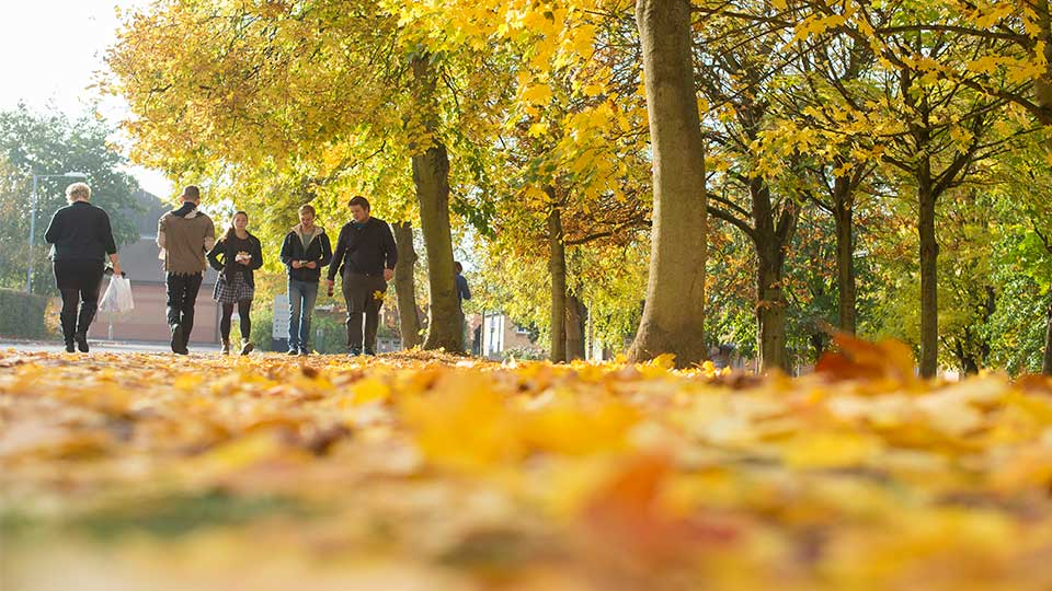 Pictured are students walking along a leafy path.