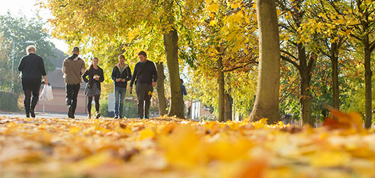 Pictured are students walking on a leafy path.