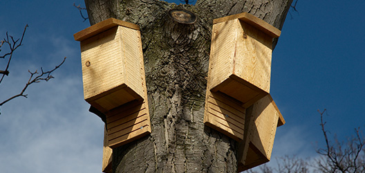 Pictured are bat boxes.