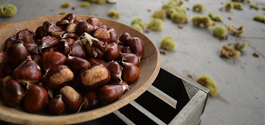Pictured are a bowl of chestnuts.