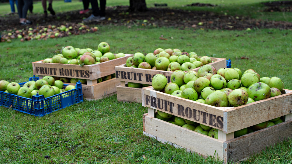photo of harvested apples in boxes