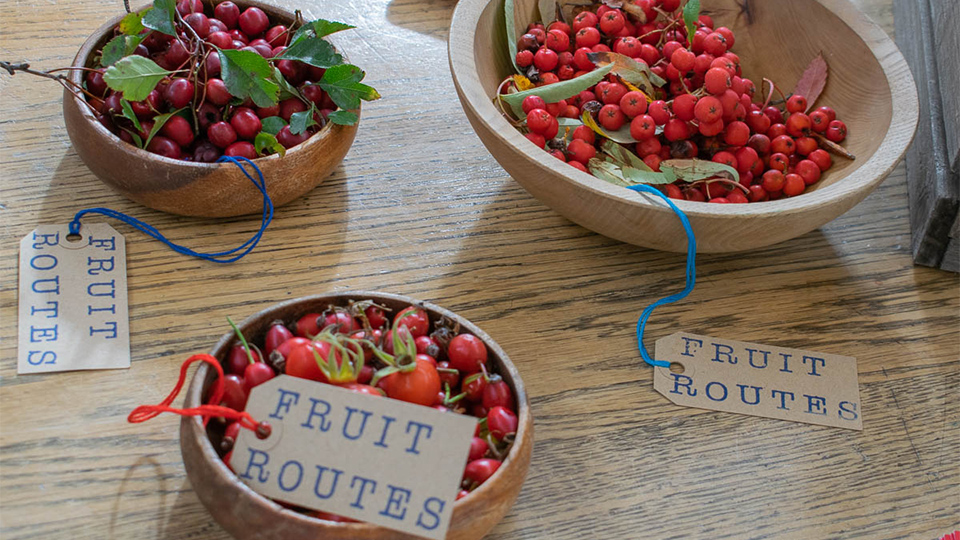Photo of different types of berries foraged in wooden bowls