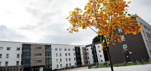 photo of outside of Robert Bakewell halls of residence with autumn tree in front