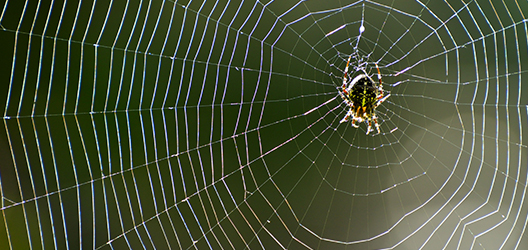 photo of a spider on a cobweb