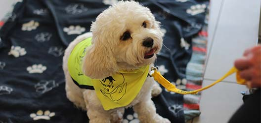 photo of a dog wearing a 'Therapy Dog' vest, at Loughborough University London